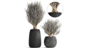flower pot trees 3D model