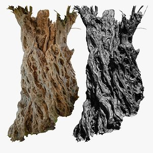 3D Ancient Olive Tree 2x16k Textures Scan model