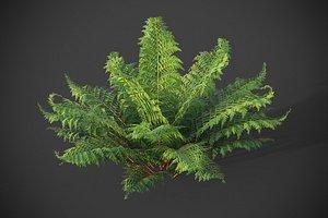 XfrogPlants Male Fern - Dryopteris Filix 3D model