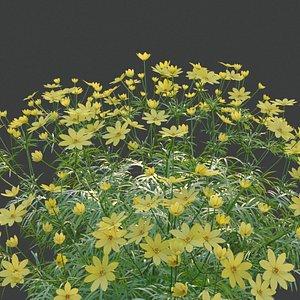 XfrogPlants Pot of Gold - Coreopsis Verticillata 3D model