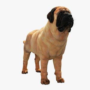 English Mastiff 3D model