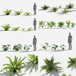 3D Plants Pack 7: Rainforest: GrowFX model