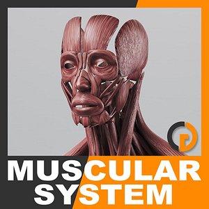 maya anatomically human muscular -