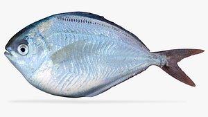 3D butterfish fish model