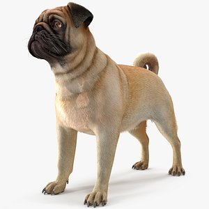pug dog neutral pose 3D model