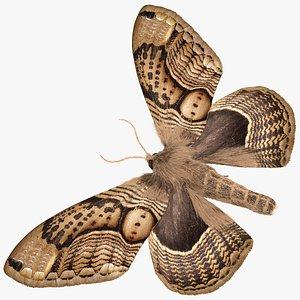 3D model Brahmaea Wallichii Butterfly Fur