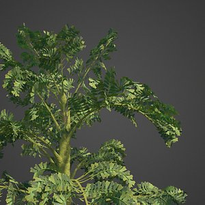 palm tree nature 3D model