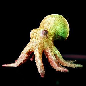 octopus squid animals 3D model