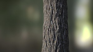 bark tree seamless model