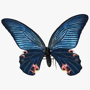 Papilio Protenor Butterfly Male Fur 3D model