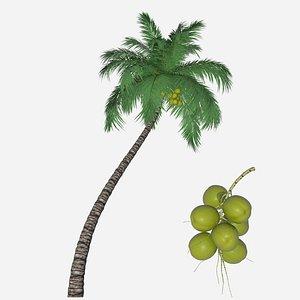 3D coconut palm branch