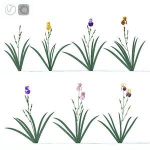 iris plant flower model