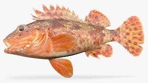 california scorpionfish fish 3D model