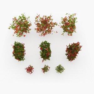 3D nandina domestica tree plant