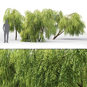 willow trees 3D model