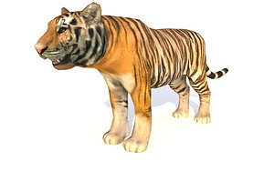 3D tiger animations