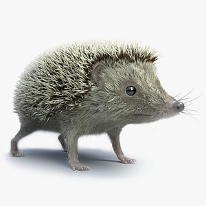 3D realistic hedgehog model