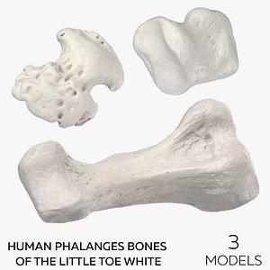 Human Phalanges Bones of the Little Toe White - 3 models 3D model