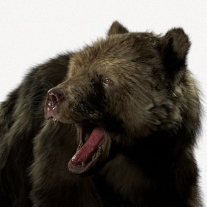 Bear Brown Rigged Houdini 3D