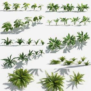 3D Plants Pack 9: Rainforest: GrowFX