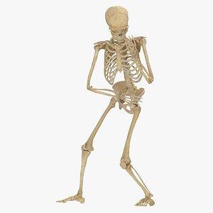 3D model real human female skeleton