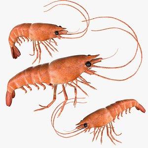 3D Rigged Shrimp