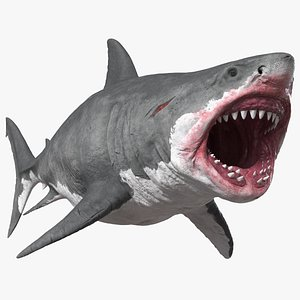 Megalodon Attacking Pose 3D