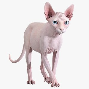 3D Sphynx Cat 2019 Pink Animated model