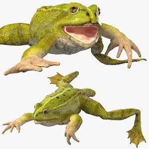 3D model Froglet Rigged
