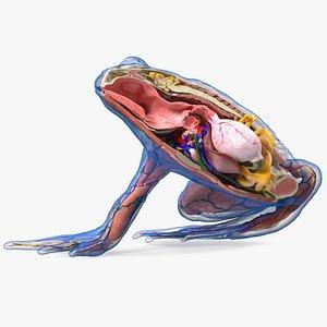 Frog Anatomy Right Side Transparent model