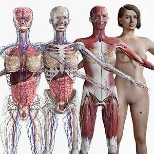 Female Complete Anatomy 3D model