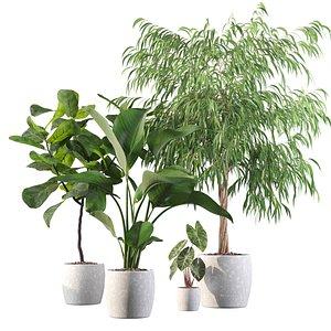 Plants collection 113 3D model