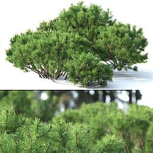 3D trees mugo