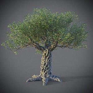XfrogPlants Olive - Olea Europaea 3D model