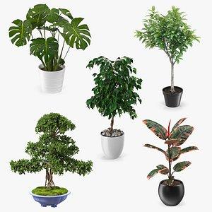 Houseplants Collection 3 3D model