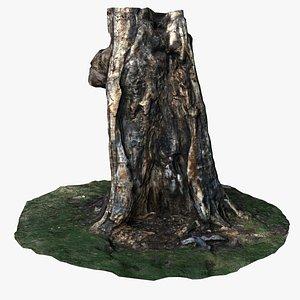 Burnt Tree 3D model