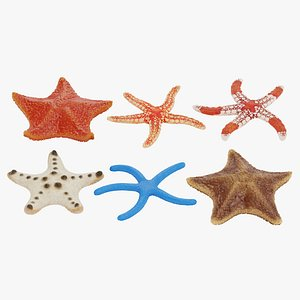 3D starfishes rigged