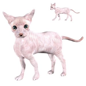 Fully rigged low poly Sphynx Cat 3D model