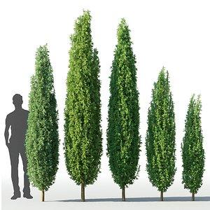 3D model juniper juniperus
