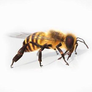 HoneyBee  XGEN ANIMATED 3D model