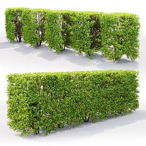 hedge spiraea 3D model