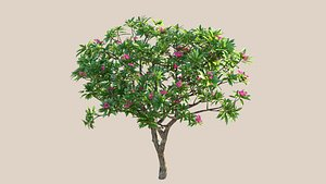 3D plumeria frangipani tree model