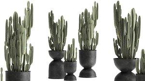 plants interior pots flowerpot 3D