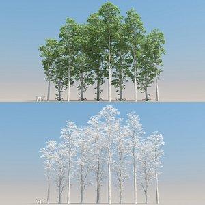 3D summer birch tree