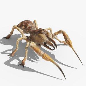 3D solifugae camel spider monster