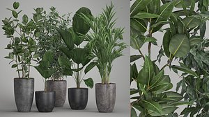 Houseplants in a flowerpot for the interior 1003 3D model