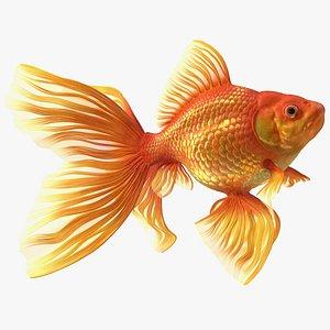 Orange Fancy Fantail Goldfish Swimming Pose 3D model