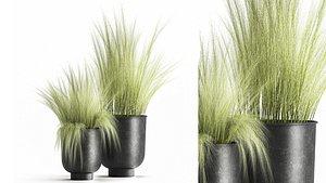 Grass in a Flowerpot for the interior 1004 3D