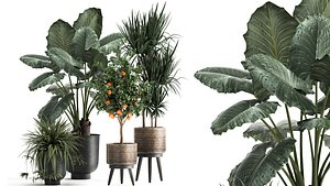 Houseplants in a flowerpot for the interior 1002 3D