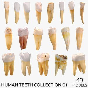 3D model Human Teeth Collection 01 -  43 models
